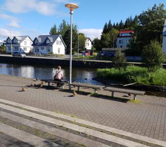 Lækurinn í Hafnarfirði
